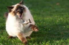 ¿Es bueno dejar que los gatos salgan fuera?