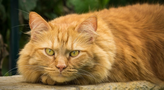 Esto es lo que a los gatos no les gusta