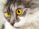 ¿Qué hago si mi gato es envenenado?