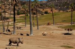 Parque temáticos ¿peligrosos para la vida salvaje animal?