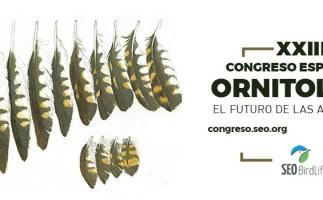 Las aves comunes protagonizan el XIII Congreso Ornitológico de SEO/Birdlife