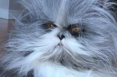 Este perro-gato ya triunfa en redes sociales