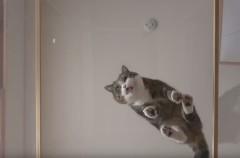 Maru, el gato más travieso y famoso de las redes sociales