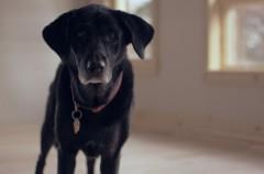 Un perro se queda atrapado en un ascensor… Y pulsa el botón de alarma