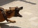 Qué hacer si vuestro perro es agresivo