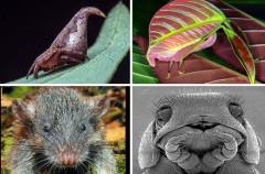 Descubren 20.000 nuevas especies en 2016: aquí están las 10 más sorprendentes