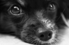 Cómo bañar un cachorro (Parte III)