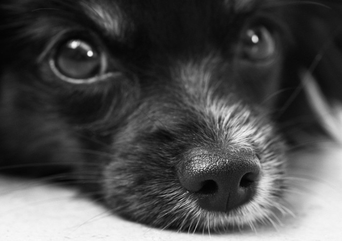 Es muy importante cuidar la alimentación de los perros