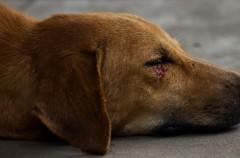Consejos para curarle las heridas a vuestro perro