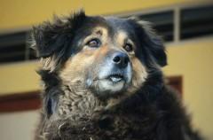 Heces: una buena manera de saber si vuestro perro está sano