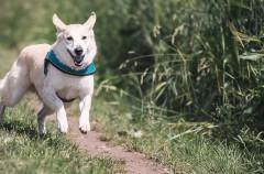 Cinco consejos para hacer ejercicio con vuestro perro