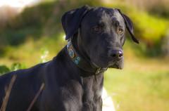 Alzheimer, una enfermedad que los perros también sufren