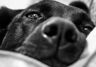 Vende su negocio para fotografiar perros