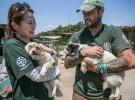 130 perros son rescatados de una granja de carne de perro