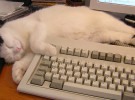 Japón, el país en el que los gatos trabajan