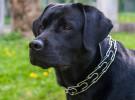Un perro independiente que va al parque sin su dueño