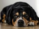 Qué hacer si vuestro perro vomita