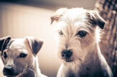 Qué hacer si vuestro perro tiene sarna