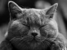 Las alergias  a los animales (Parte II)