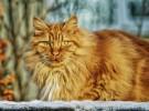 Cuidados para el pelo de los gatos (Parte II)