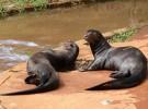Los 5 animales «gigantes» más esquivos del planeta