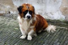 Abandono animal en cifras: 138.000 perros y gatos fueron rescatados en 2016