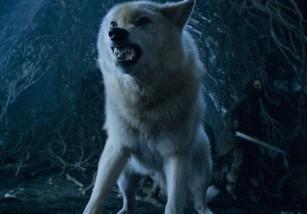 Peter Dinklage, actor de Juego de Tronos, solicita que no se compren más huskies