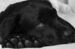 ¿Diarrea en mascotas? Esto es lo que debéis hacer