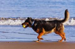 Agua de mar: ventajas y desventajas para los perros