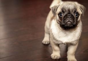 Cómo evitar que el perro haga sus necesidades en casa