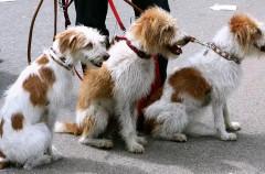 Fomentando la adopción de mascotas en el Dog Day