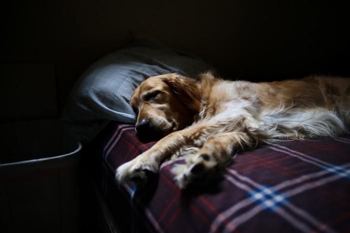 Ventajas y desventajas de dormir con una mascota
