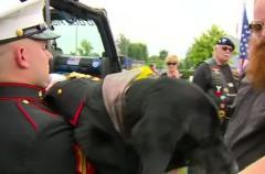 Adiós a Cena, un héroe canino