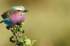 SEO/Birdlife prepara el Día de las Aves poniendo el foco en las migraciones