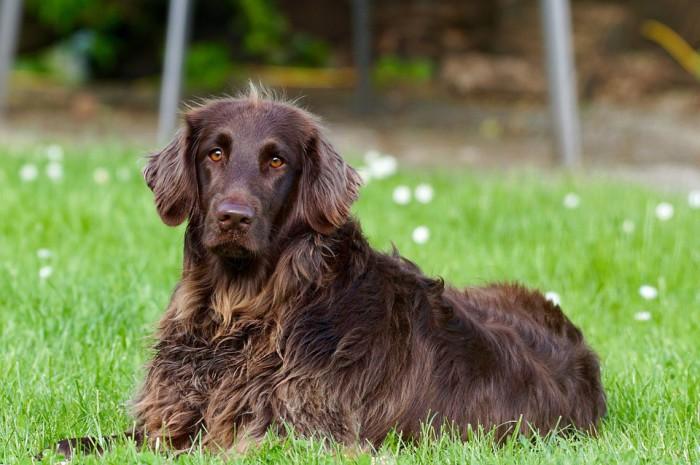 Son muchas las razones por las que un perro pierde su pelo