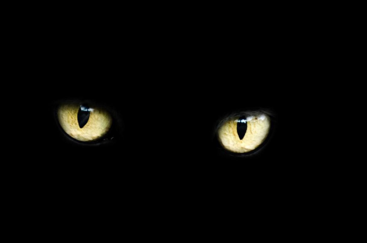 Un vistazo a la visión nocturna de los gatos