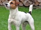 Multas y perros: algunas recomendaciones legales
