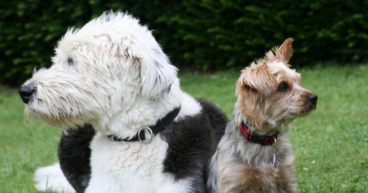 ¿Se le puede cambiar el olor a un perro?
