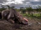 """""""Wildlife Photographer of the Year"""" reúne en Madrid las 100 mejores fotografías de naturaleza de 2017"""