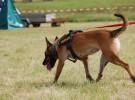 Frida, un rescate canino en la escuela