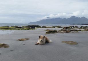 La isla de los perros y su cuidador, una historia curiosa