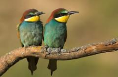 Se triplican las aves comunes amenazas en solo 10 años