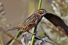 SEO/Birdlife estudia el declive de las aves españolas con el programa Sacín
