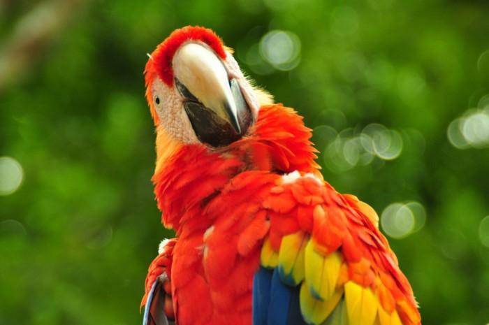Pájaro exótico
