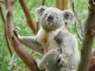 Las especies amenazadas aumentan un 30% en 2017
