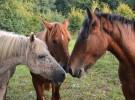 Qué hacer ante un caballo asustado