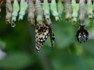Metamorfosis ¿qué es y cómo afecta a los animales?
