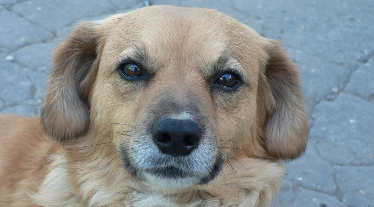 Mascotas: Los exámenes de la vista también son importantes