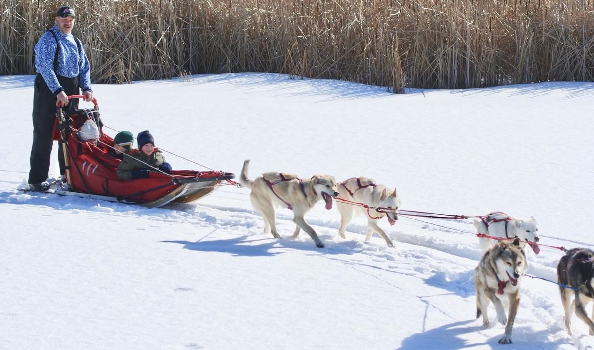 Mushing, los deportes con animales que se hacen en la nieve