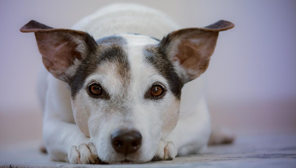 ¿Cómo conseguir que los perros respeten los espacios de la casa?